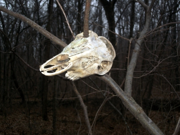 Deer Skull at Bittersweet Mountain Bike Trail