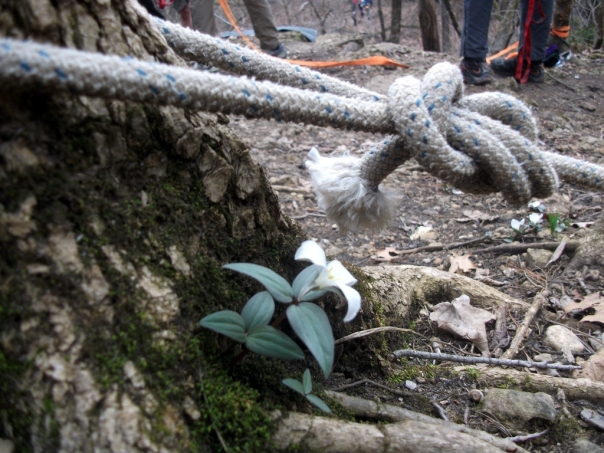 Fixed Ropes ath High Profile Adventure Camp